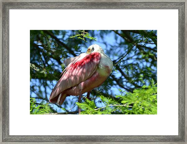 Guarding The Nest Framed Print