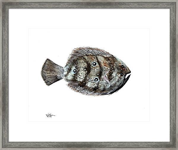 Gulf Flounder Framed Print