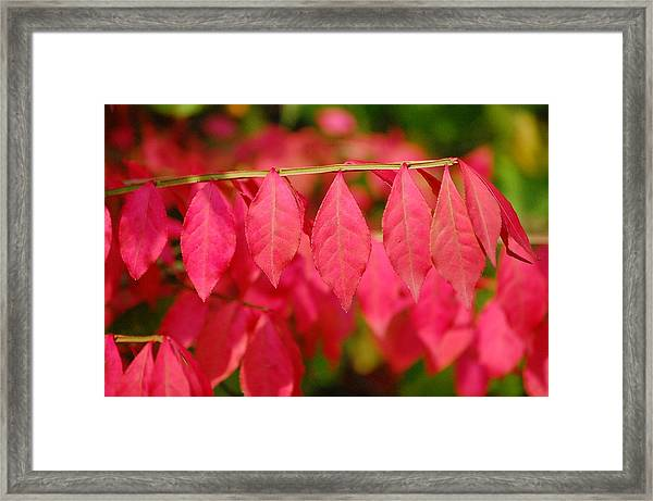 Hangin' Out Framed Print