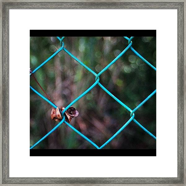 Hanging To The Fence, By My Lens Framed Print