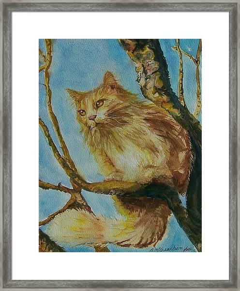 Hanserelli Framed Print by Barbara McGeachen