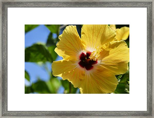 Hello Yellow Framed Print