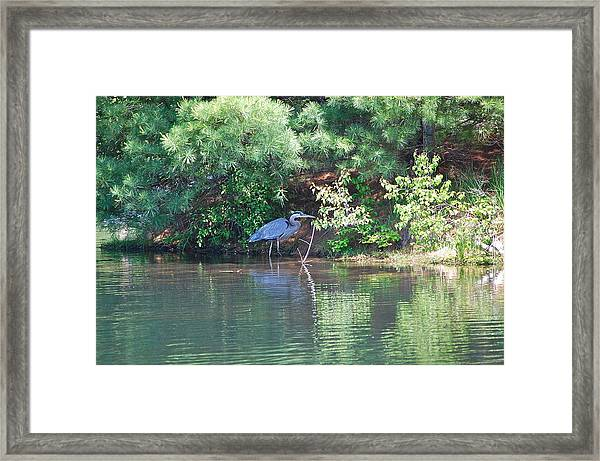 Heron Under Pines Framed Print