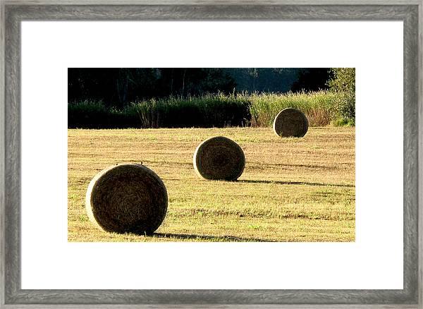 Hey Harvest Framed Print