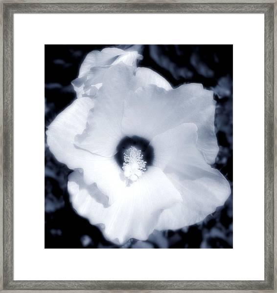 Hibiscus Seduction Framed Print