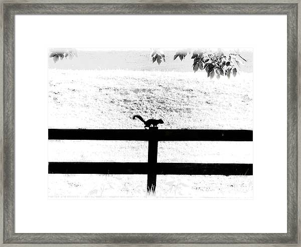 Hiding In The Shadows Framed Print