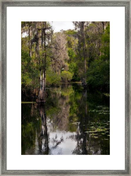 Hillsborough River In March Framed Print