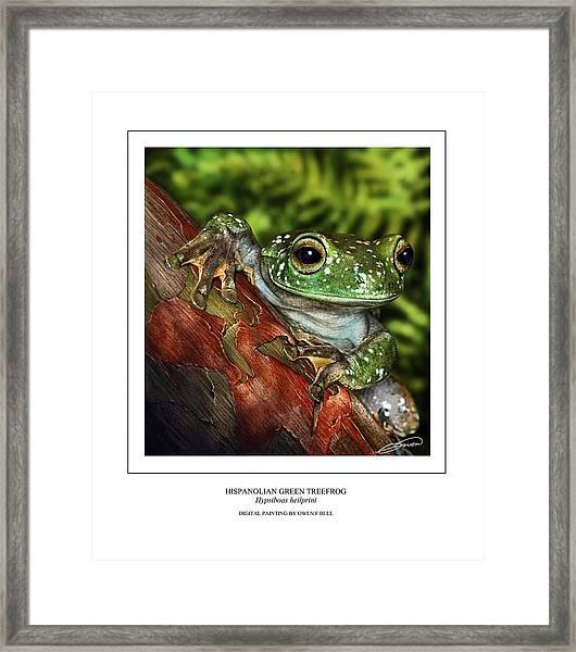 Hispanolian Green Treefrog Framed Print by Owen Bell