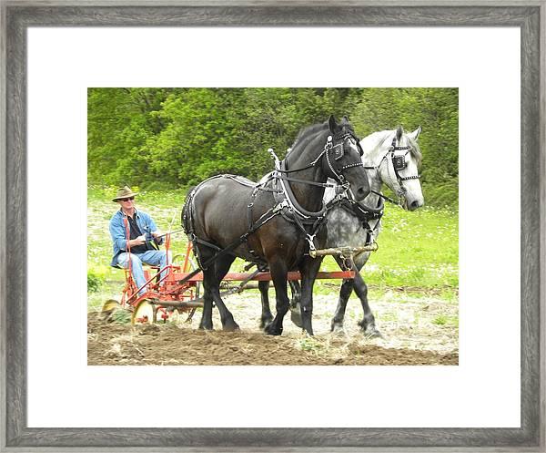 Horse Power 2 Framed Print