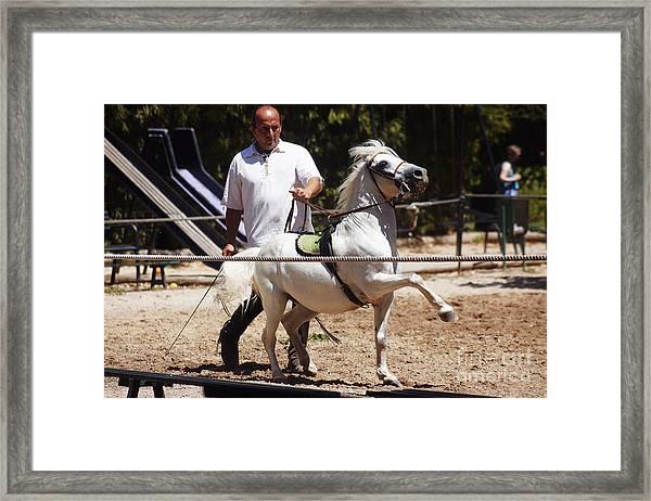 Horse Training Framed Print
