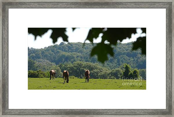 Horses And Summer Breeze Framed Print