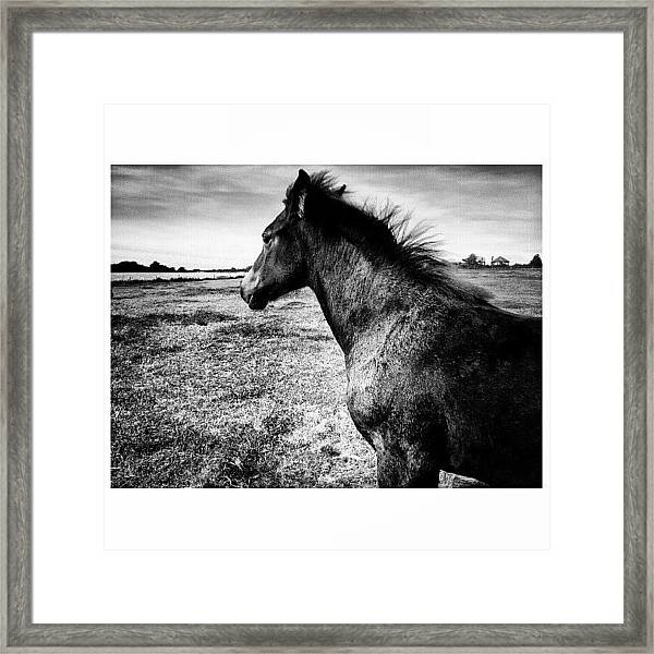 #horses #horse #pony #ponies #foal Framed Print by Little Images