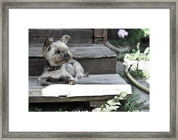 Hostess Framed Print
