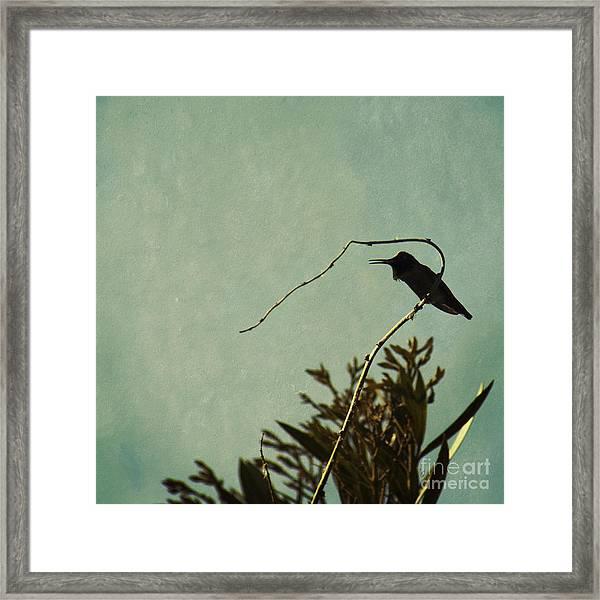 Hummingbird On Winter Wisteria Framed Print