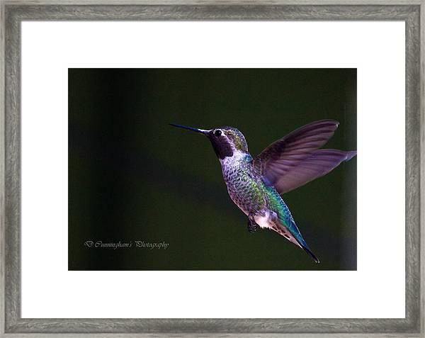 Hummingbird's Visit Framed Print