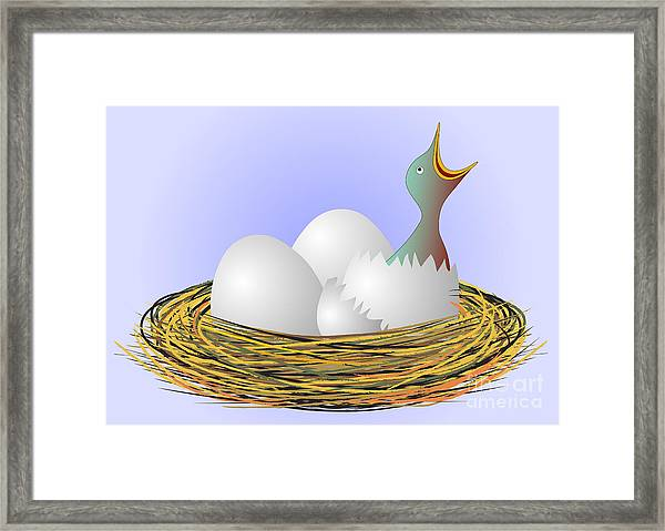 Hungry Bird In Nest Framed Print