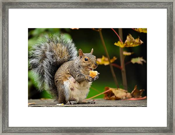 Hungry Momma Framed Print