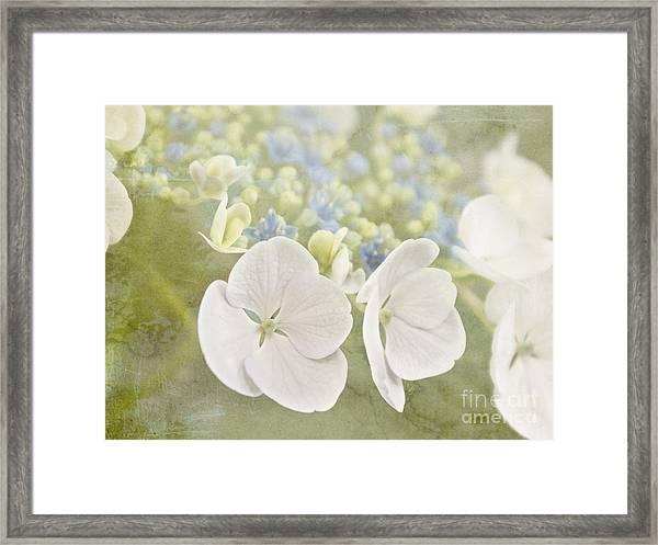 Hydrangea Dreams Framed Print