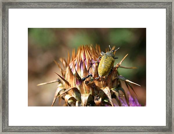I Due Amici Framed Print