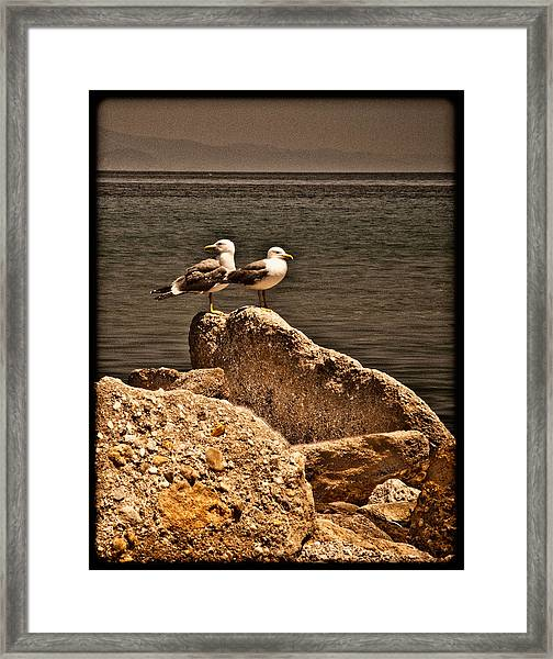 Afitos, Greece - I Think We're Alone ... Framed Print