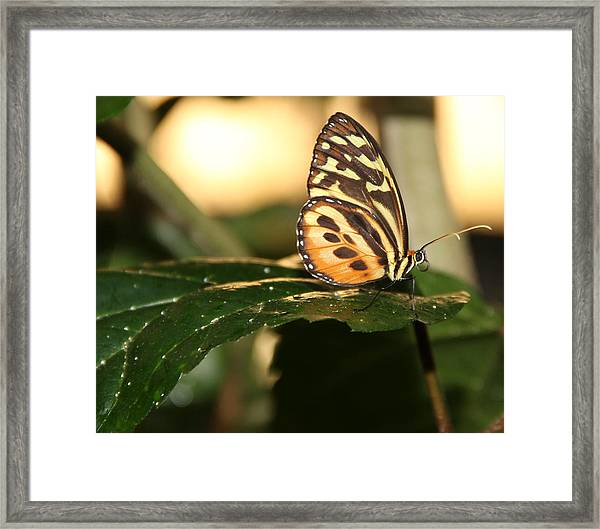I'm Going Places Framed Print