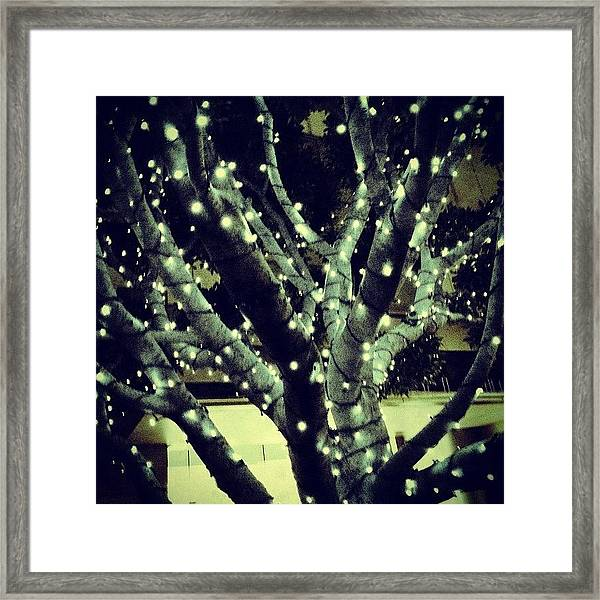 Image Created With #snapseed #tree Framed Print