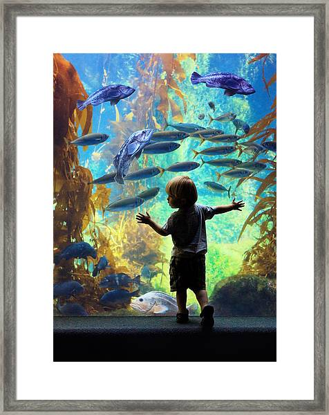 Immersion  Framed Print by Donna Pagakis