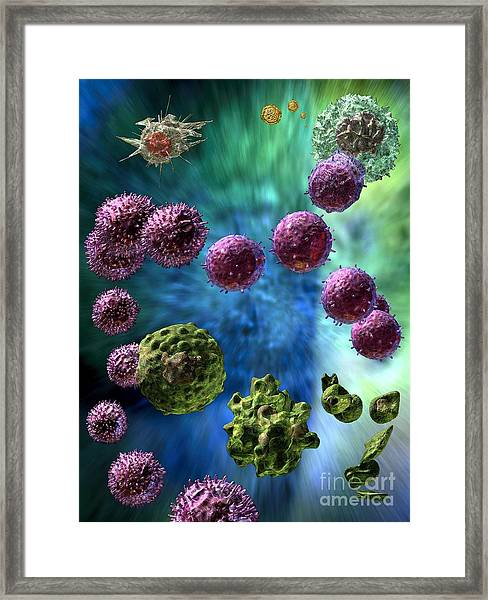 Immune Response Cytotoxic 3 Framed Print