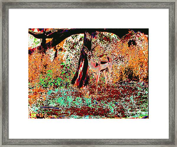 Impala In The Forest Framed Print