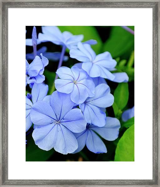 Imperial Blue Framed Print