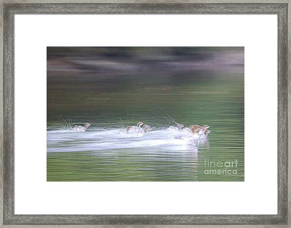 In Action Framed Print