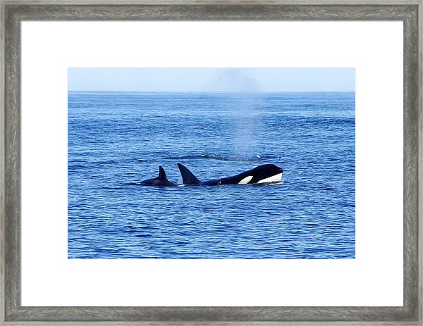 In The Great Wide Ocean Framed Print