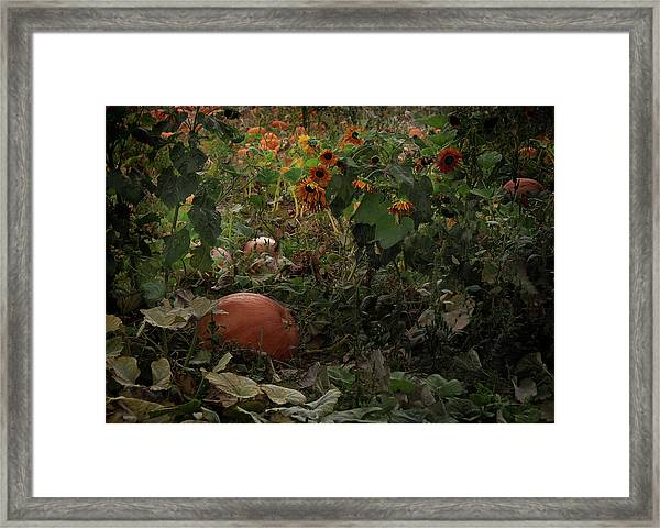 In The Shades Of An Autumn Sky Framed Print