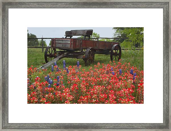 Indian Paintbrush And Wagon Framed Print