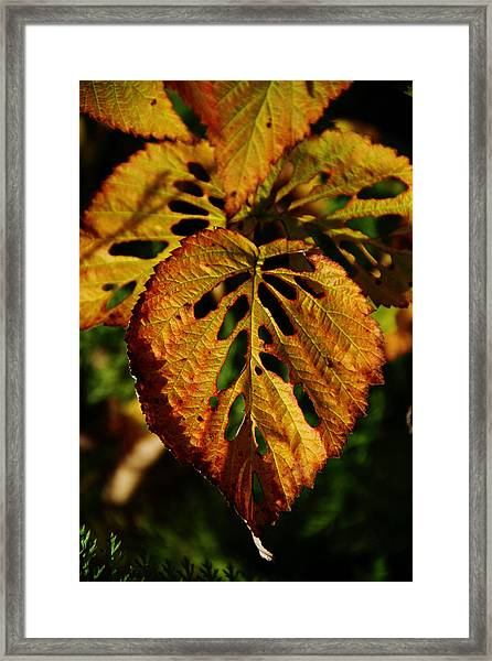 Insect Art Framed Print