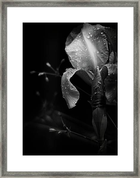 Iris Adorned Framed Print