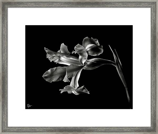 Iris In Black And White Framed Print