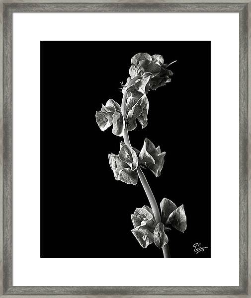 Irish Bells In Black And White Framed Print