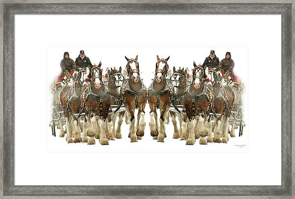 It's A Clydesdale Christmas Framed Print