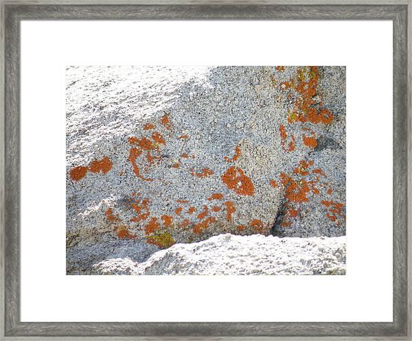 Joshua Tree Orange Lichen Framed Print by Claire Plowman