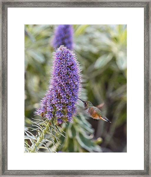 Juicy Flower Framed Print