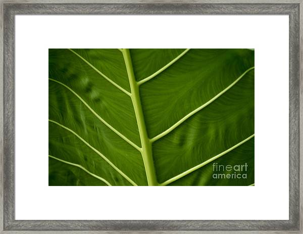 Jungle Leaf Framed Print