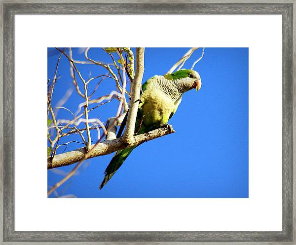 Just A Little Nibble Framed Print by AnnaJo Vahle