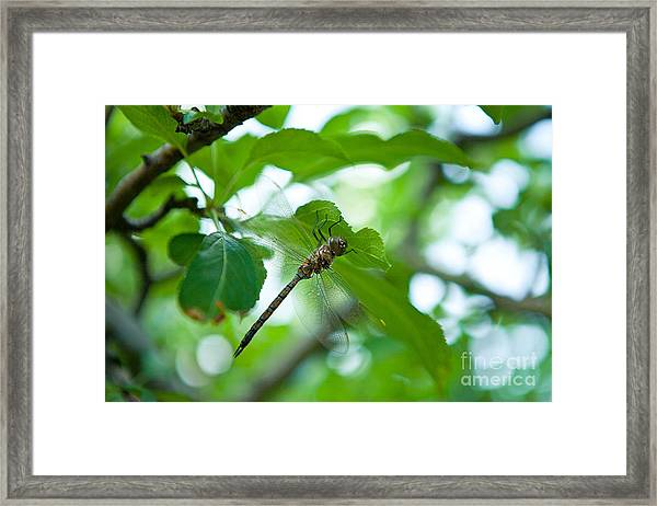 Just Buzzin By Framed Print
