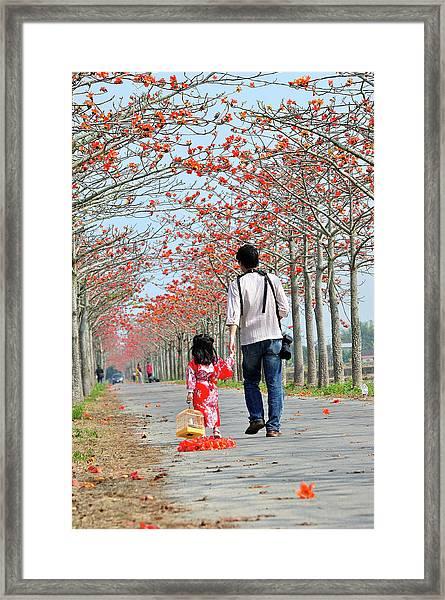 Kapok Road Framed Print