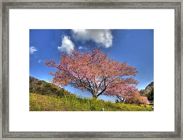 Kawazu Sakura-ii Framed Print