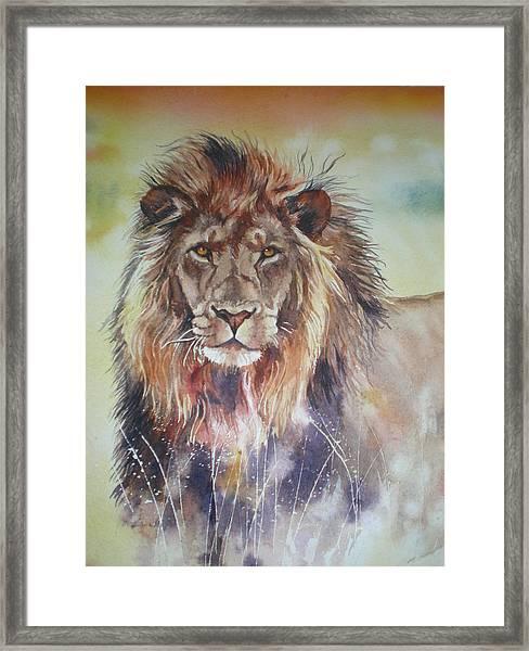 Kenyan Lion Framed Print by Sandra Phryce-Jones