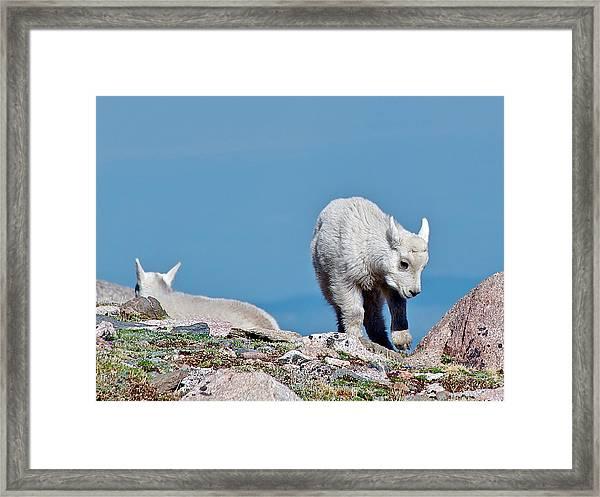 Kids On The Tundra Framed Print
