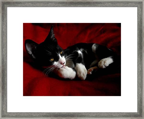 Kitten On Red Take Two Framed Print
