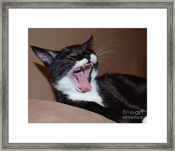Kitten Yawns Framed Print